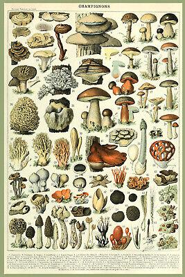 8332.Decoration Poster.Home Room wall design art print.Mushroom Science decor - Science Decor