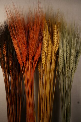"Dried Flowers Dried Wheat 50 Pieces Bunch 28""-32"" long Choose Color 01502380"