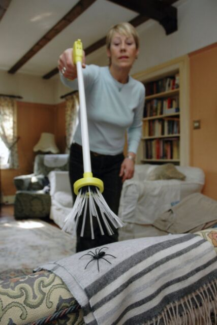 Humane Spider Bug Fly Bee Wasp Moth Insect Catcher Trap for Arachnophobes