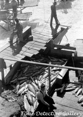 Indians Fishing for Salmon, Celilo Falls, Oregon (4) -1941- Historic Photo Print