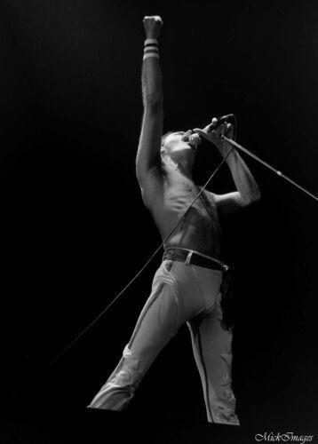 "11 x 14 inch ""Freddie Mercury"" vintage concert photograph"