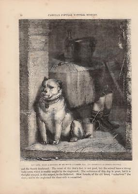 Strassenköter Hund Hunde Hundeleben HOLZSTICH von 1866