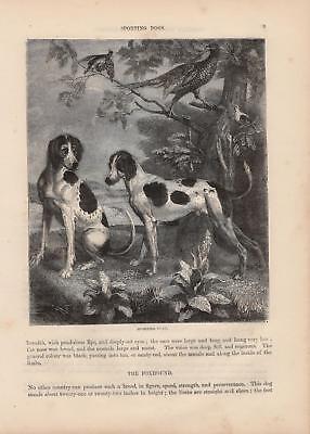Hunde Jagdhunde Fasane HOLZSTICH von 1866 SPORTING DOGS