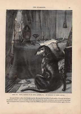 Hund Edles Hundeleben HOLZSTICH von 1866