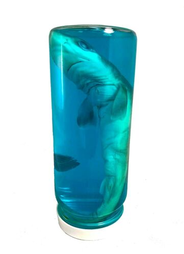 Real Authentic Shark in a Bottle Jar, Marine Specimen Taxidermy, Jaws, Fishing.