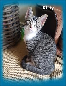 Kitten. Adopt me kittens (Kitty) Bentley Park Cairns City Preview