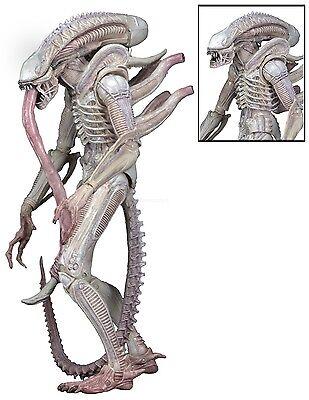 """Aliens - 7"""" Scale Action Figure - Series 9 - Albino Drone Xenomorph - NECA"""