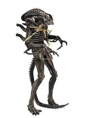 "Aliens - 7"" Scale Action Figure - Series 12 - Brown Battle Damaged Warrior -NECA"