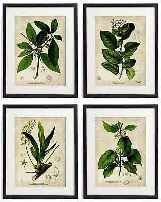 Vintage Botanical Floral No. 08 Art Home Wall Art Print Set of 4 Prints (Botanical Setting)