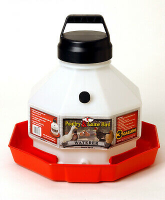 Little Giant 3 Gallon Plastic Poultry Chicken Waterer Ppf3