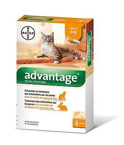 ADVANTAGE-40-bte-de-4-pipettes-pour-chat-et-furet-moins-de-4-kg