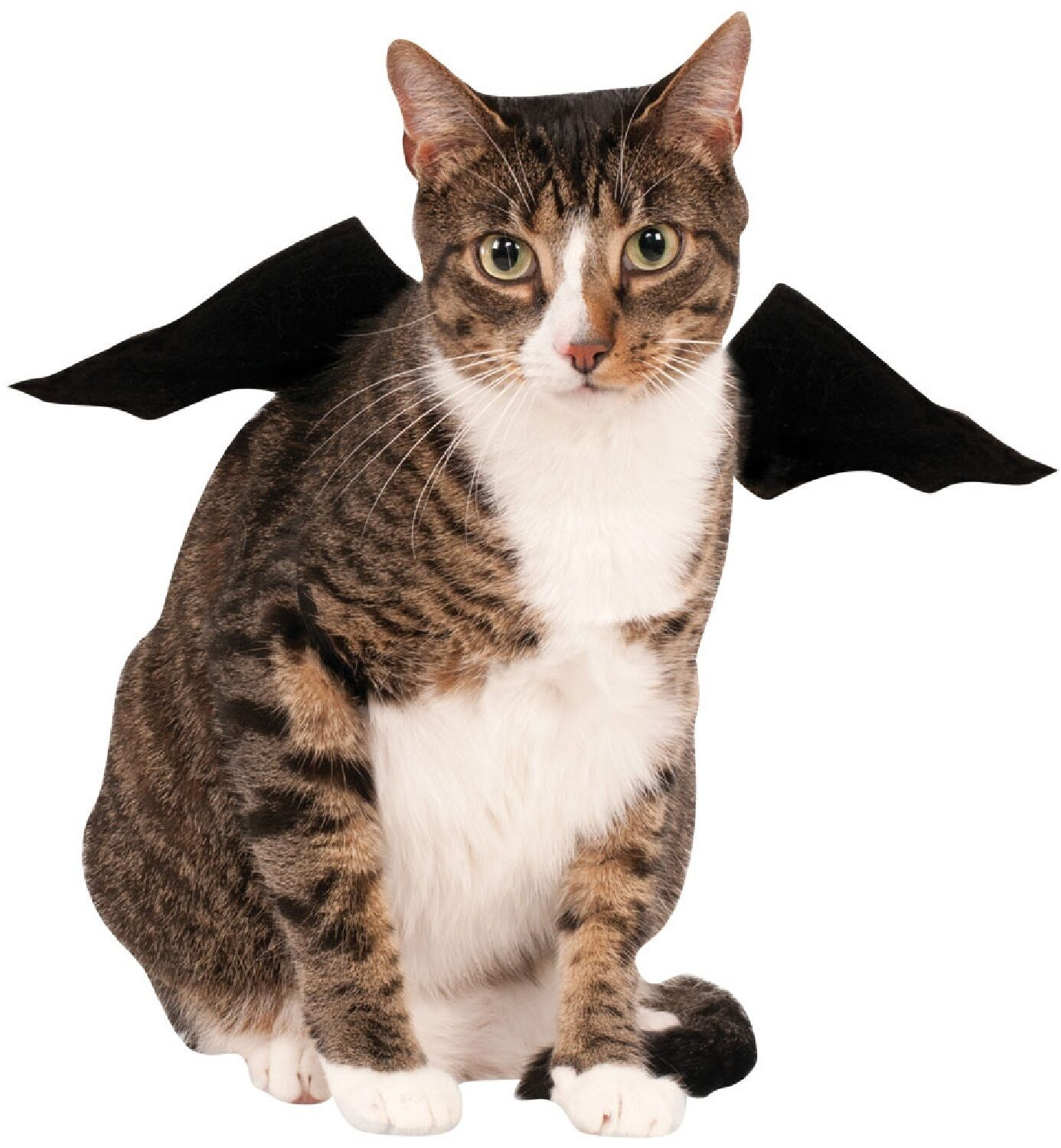Animal Pet Dog Cat Bat Vampire Halloween Fancy Dress Costume Outfit Wings 6