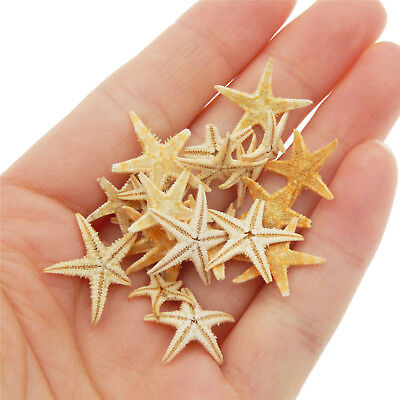 20pcs Natural Starfish Decorations Sea Star Crafts Decor For Micro Landscape