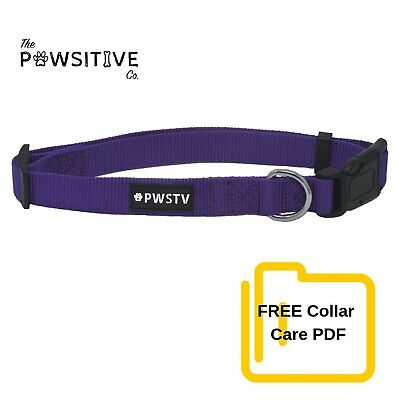The Pawsitive Co. Classic Solid Color Dog Collar - Purple -