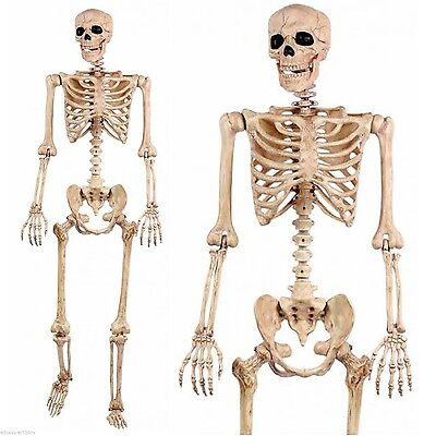 5' Pose N Stay Life Size Skeleton - Halloween - Life Size Skeleton Decoration