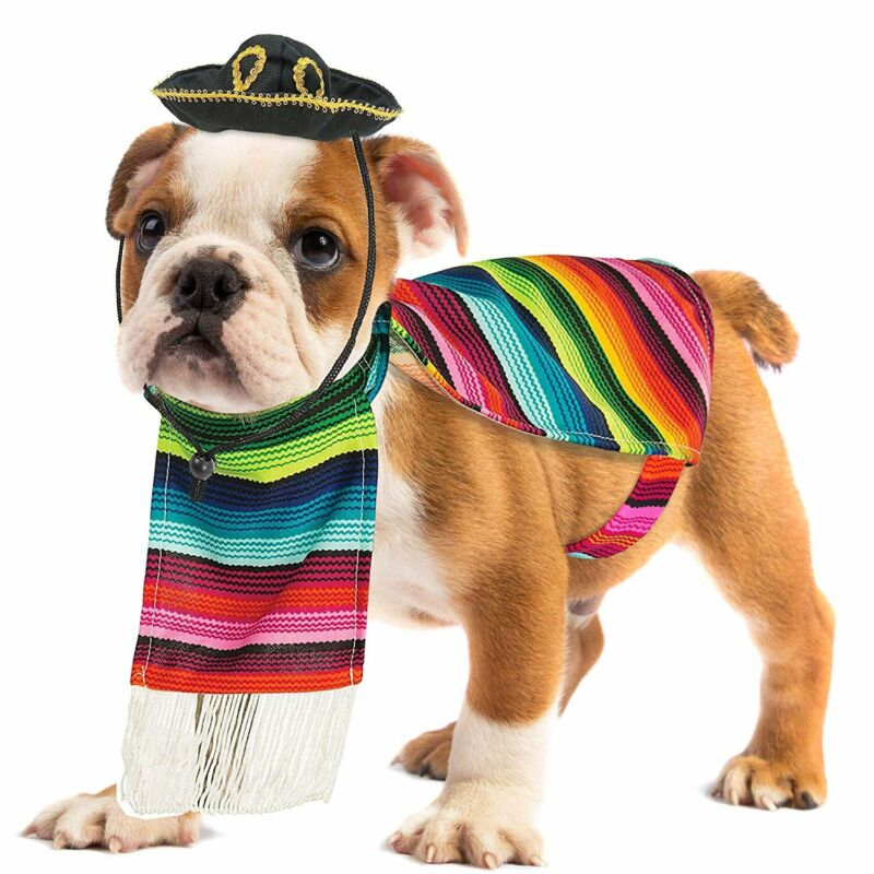 Skeleteen Mexican Serape Dog Costume -Small