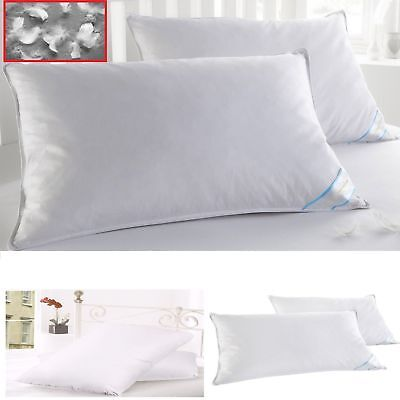 Luxury Goose Feather (2 King Size Pillows Goose Down Feathers Bed Set Luxury Pillows Thread Count Cott )