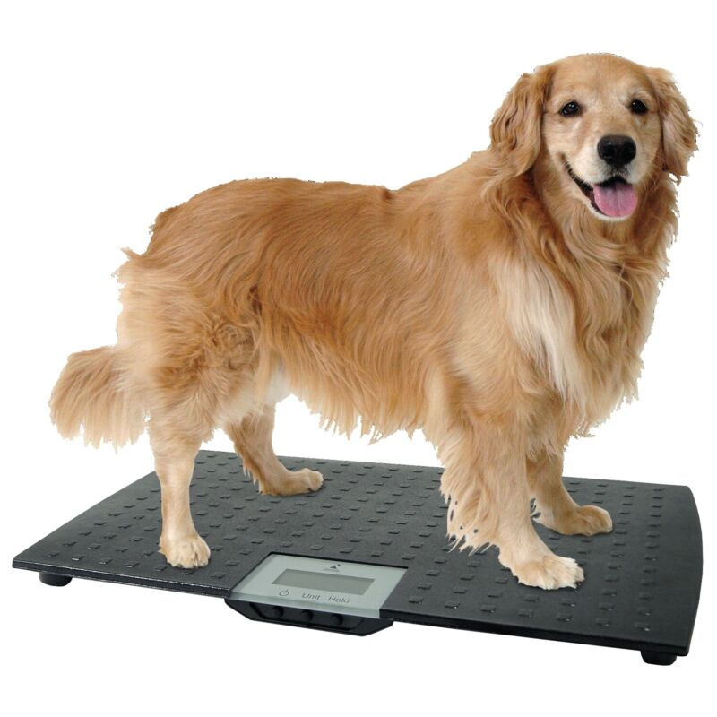LARGE DIGITAL PET SCALE Veterinary Animal Weight Dog Cat Black Up to 225 lbs NEW