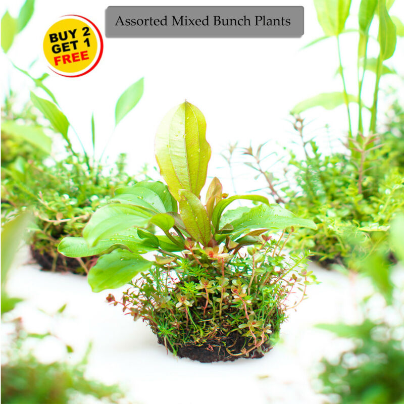 🌱BUY2 GET1 FREE Assorted Mixed Plant Bunch  Live Aquatic Plants