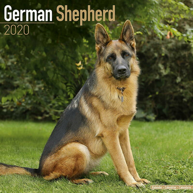 German Shepherd Calendar 2020 Premium Dog Breed Calendars