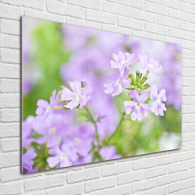 Wandbild aus Plexiglas® Druck auf Acryl 100x70 Blumen & Pflanzen Eisenkraut ()
