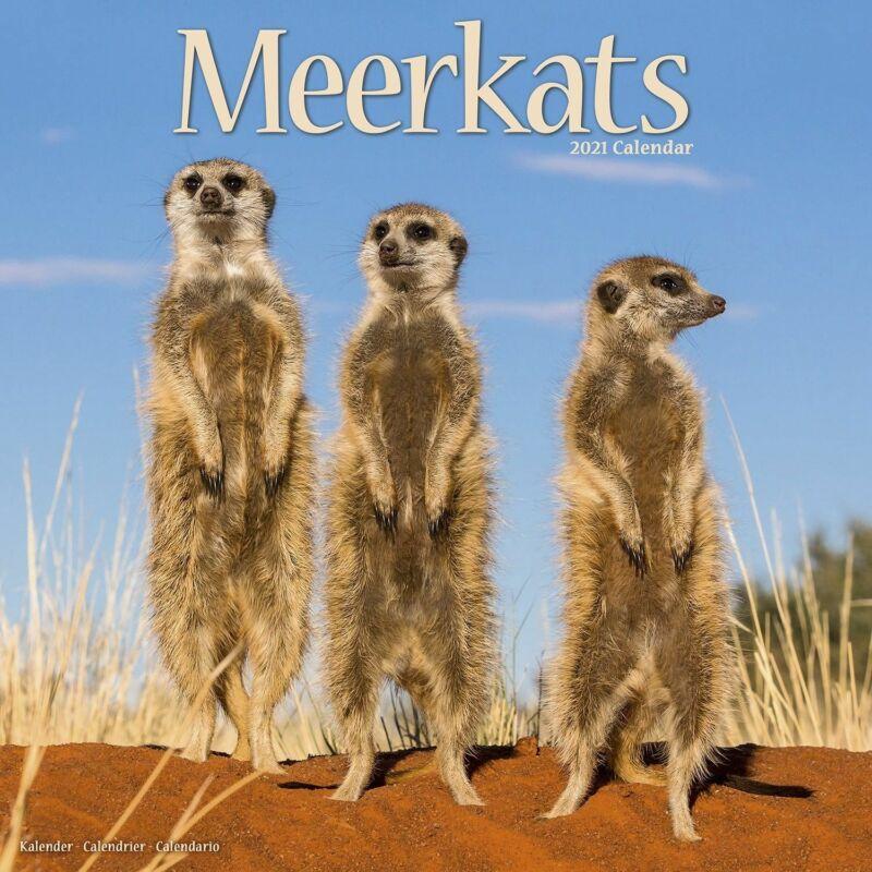 Meerkats Wall Calendar 2021 by Avonside