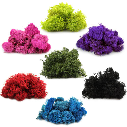 Preserved Reindeer Moss for Terrariums, Fairy Gardens, Arts & Crafts - 7 Colors