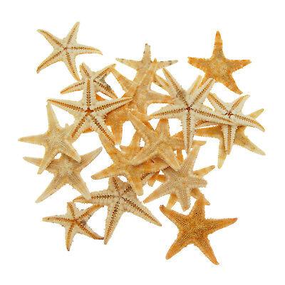 20 pcs Multi-size Mini Dried Real Starfish 0.5cm ~ 5cm Nautical Decor - Nautical Crafts