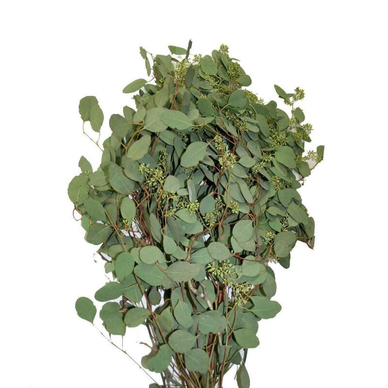 Seeded Eucalyptus fresh natural, 100 stems