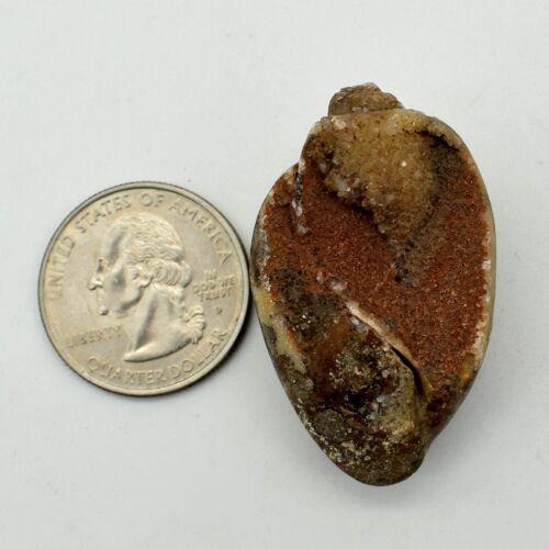 102 Cts Natural Druzy Shell Fossil Cabochon Loose Gemstone 42x25x15 MM TA-264