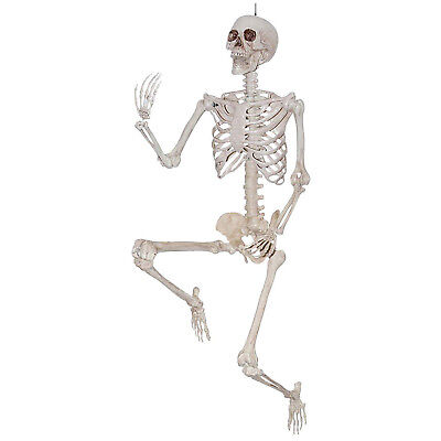 Sunstar 5 Foot Life Size Pose & Hold Skeleton Halloween Decoration Prop