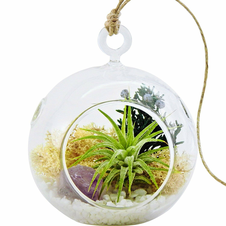 Mini Air Plant Terrarium With Purple Amethyst Crystal Shabby Chic Ebay