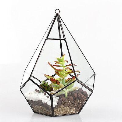 Modern Artistic Clear Hanging Air Planter Tear Diamond Glass Geometric Terrarium
