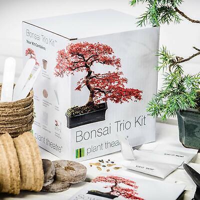 Bonsai Tree Starter Kit Grow 3 Trees RED MAPLE, SILVER BIRCH, MOUNTAIN PINE Grow Grow Pine Tree
