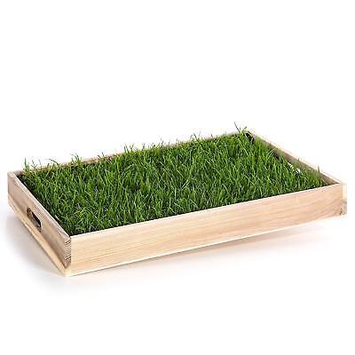 SOFORT NUTZBAR, kein Aussähen, inkl. dekoratives Holztablett (Dekoratives Gras)