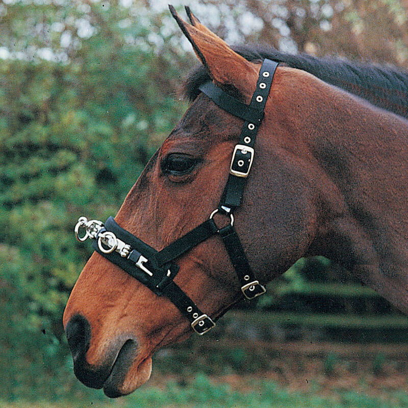 Hy Webbed Saddlery Lunge Cavesson - Black All Sizes