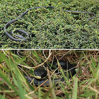 Fake Snake That Look Real Rubber Scary Gag Durable Garden Prop Realistic Toy 52
