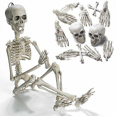 "19"" Posable Skeleton with Movable/Posable Joints For Best Halloween Decoration"