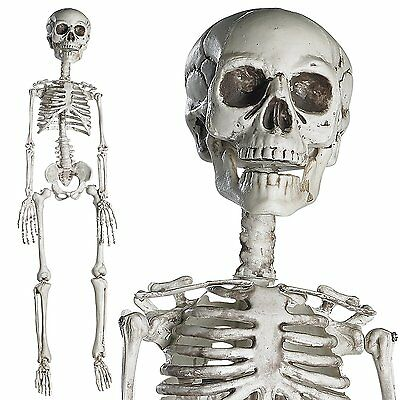 30  Full Body Halloween Skeleton With Movable Joints For Halloween Decoration
