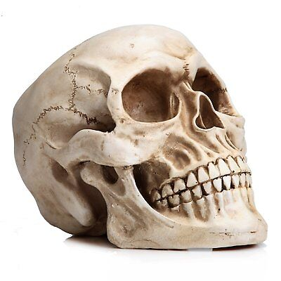 Realistic Full Size Human Skull Anatomical Skeleton Head Bone Replica Decor 1:1 - Skeleton Heads