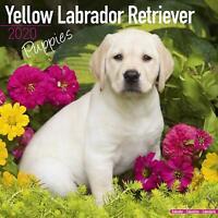Labrador Calendario 2020 colore Nero