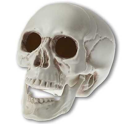 Prextex 6.5 inch Realistic Looking Skeleton Skull for Best Halloween Decoration (Best Halloween)
