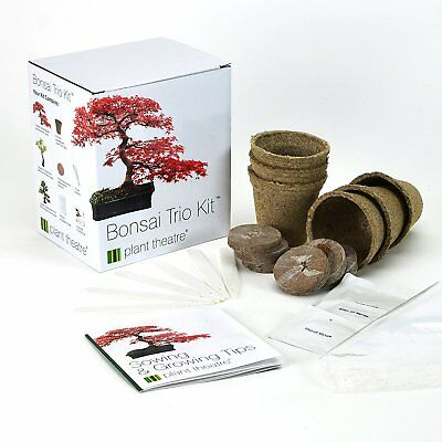 Bonsai Trio, Kit per la coltivazione di 3 bonsai, Plant Theatre