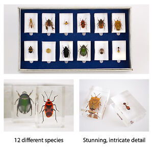 12 Assorted insects bugs beetles in resin - New in Box - Insect boxset