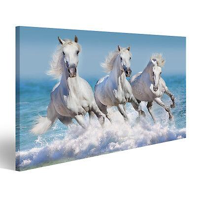 Bild Bilder auf Leinwand Pferd Herde laufen Galopp in Wellen im Ozean GFY-1P