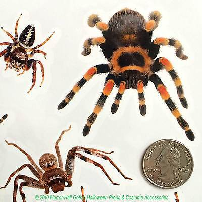 Realistic Punk TARANTULA SPIDERS Temporary Fake Tattoos Gothic Costume Makeup FX](Spider Halloween Costume Makeup)