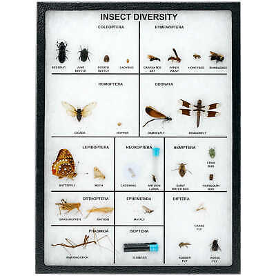 Insect Diversity Riker Mount