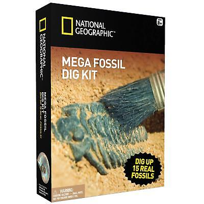 Mega Fossil Mine – Dig Up 15 Real Fossils STEM Science W/Archeological Tools  (Dig Up)
