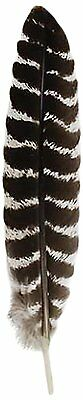 10 to 12 Inch Grade A Turkey Smudging Feather](Turkey Feather)