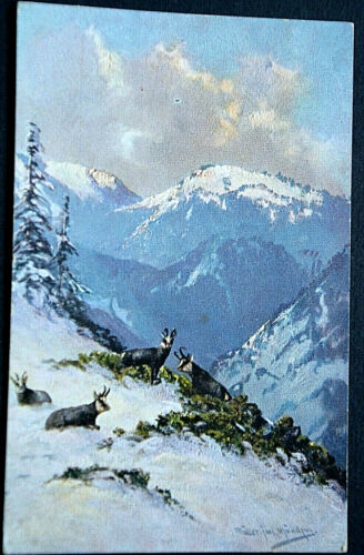 49527 Ak Hunting Chamois On Mountains IN Snow To 1908